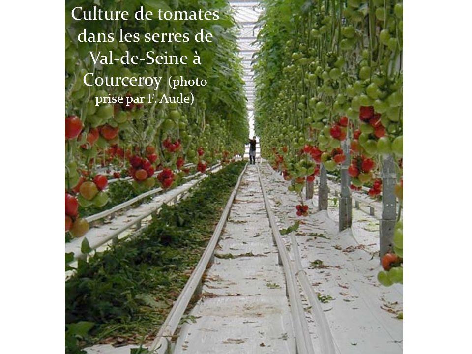 Culture de tomates dans les serres de Val-de-Seine à Courceroy (photo prise par F. Aude)
