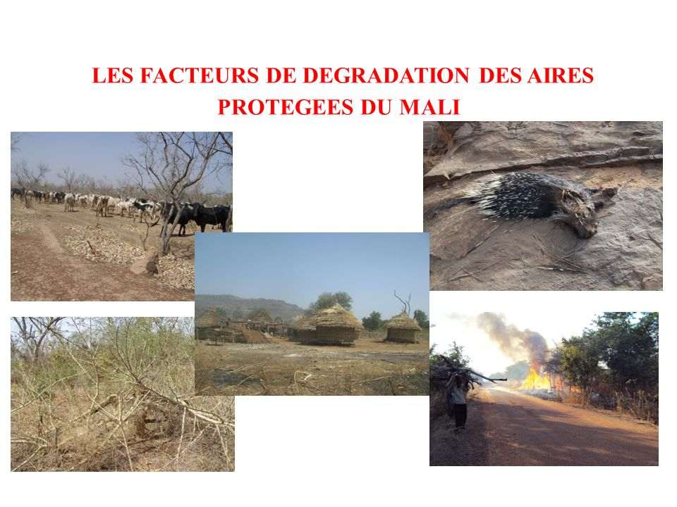 LES FACTEURS DE DEGRADATION DES AIRES PROTEGEES DU MALI