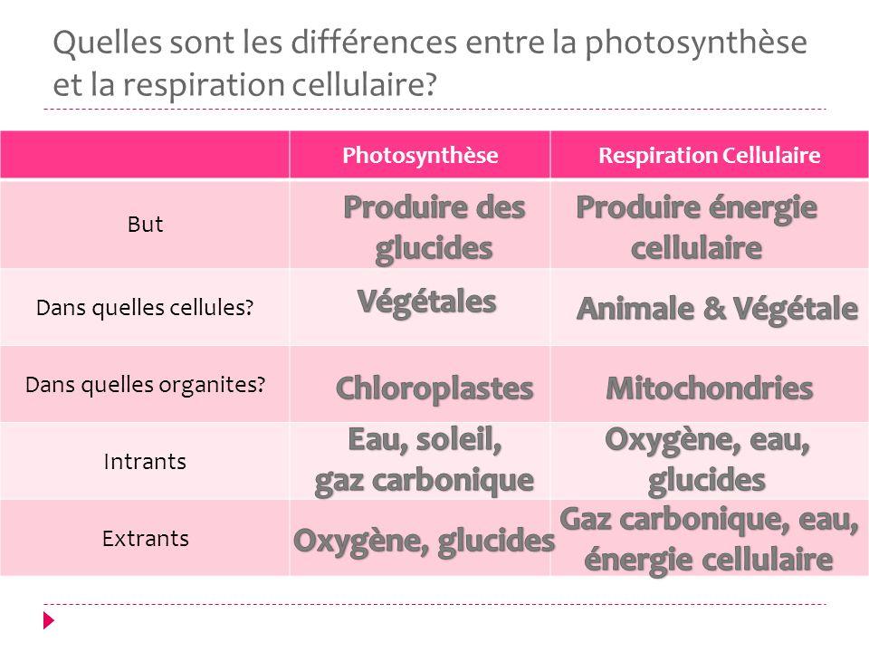Quelles sont les différences entre la photosynthèse et la respiration cellulaire? PhotosynthèseRespiration Cellulaire But Dans quelles cellules? Dans