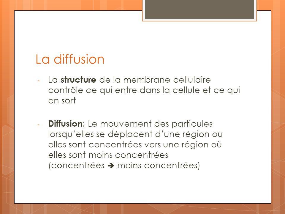 La diffusion - La structure de la membrane cellulaire contrôle ce qui entre dans la cellule et ce qui en sort Diffusion : Le mouvement des particules