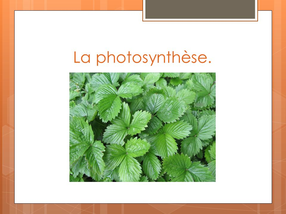 La photosynthèse.