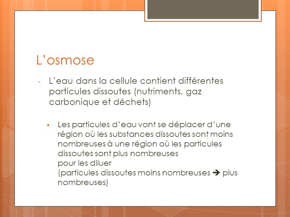 Losmose - Leau dans la cellule contient différentes particules dissoutes (nutriments, gaz carbonique et déchets) Les particules deau vont se déplacer