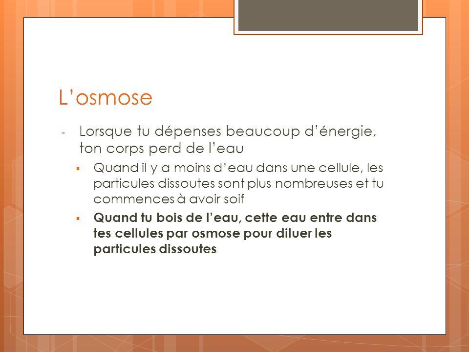 Losmose - Lorsque tu dépenses beaucoup dénergie, ton corps perd de leau Quand il y a moins deau dans une cellule, les particules dissoutes sont plus n