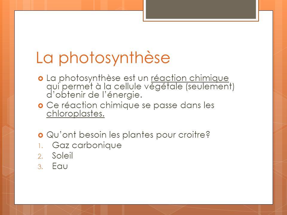 La photosynthèse La photosynthèse est un réaction chimique qui permet à la cellule végétale (seulement) dobtenir de lénergie. Ce réaction chimique se