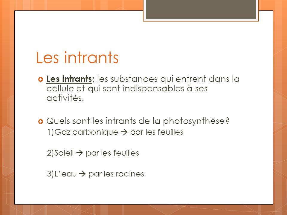 Les intrants Les intrants : les substances qui entrent dans la cellule et qui sont indispensables à ses activités. Quels sont les intrants de la photo
