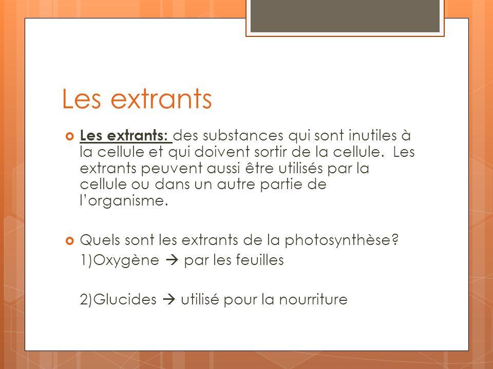 Les extrants Les extrants: des substances qui sont inutiles à la cellule et qui doivent sortir de la cellule. Les extrants peuvent aussi être utilisés