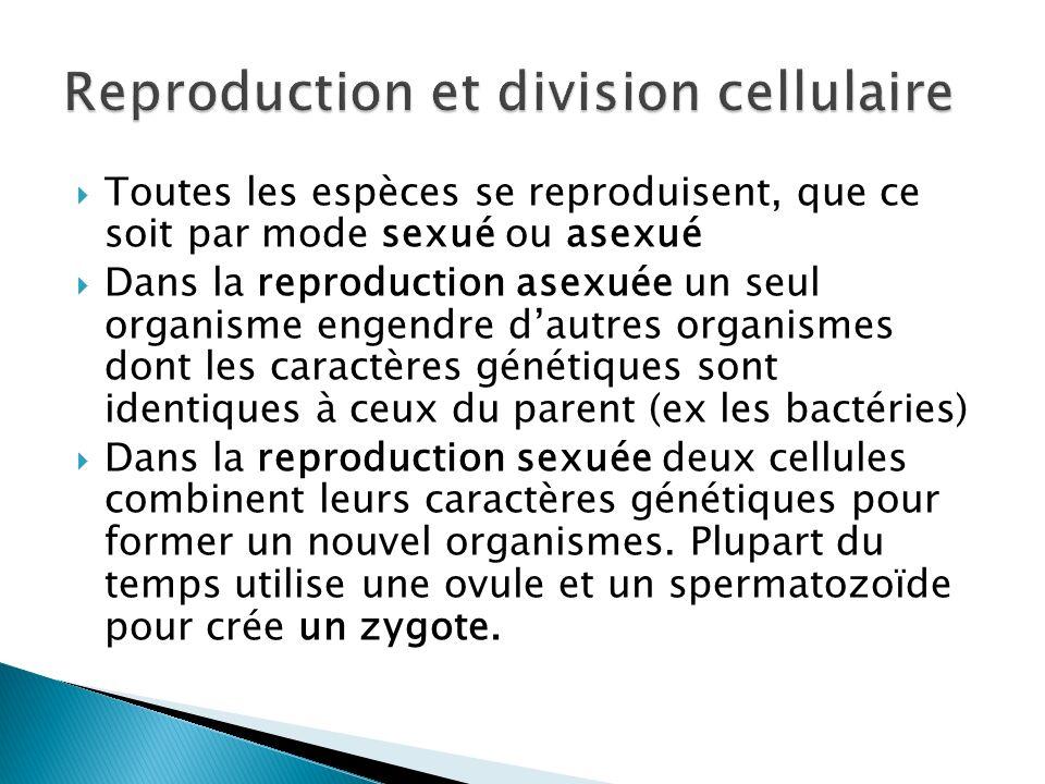 Toutes les espèces se reproduisent, que ce soit par mode sexué ou asexué Dans la reproduction asexuée un seul organisme engendre dautres organismes do