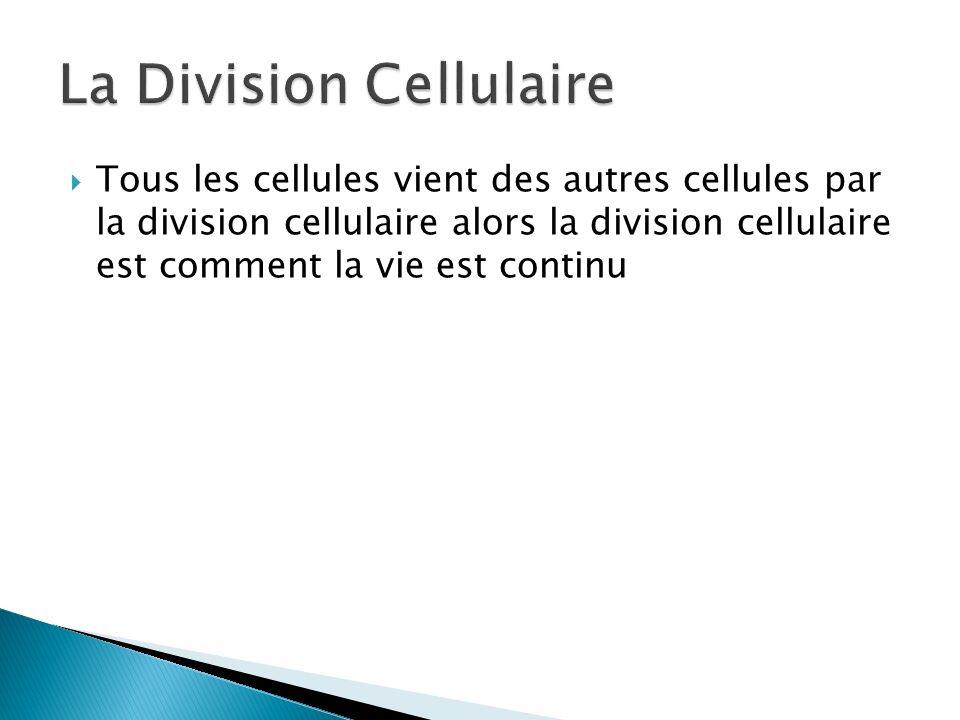Tous les cellules vient des autres cellules par la division cellulaire alors la division cellulaire est comment la vie est continu