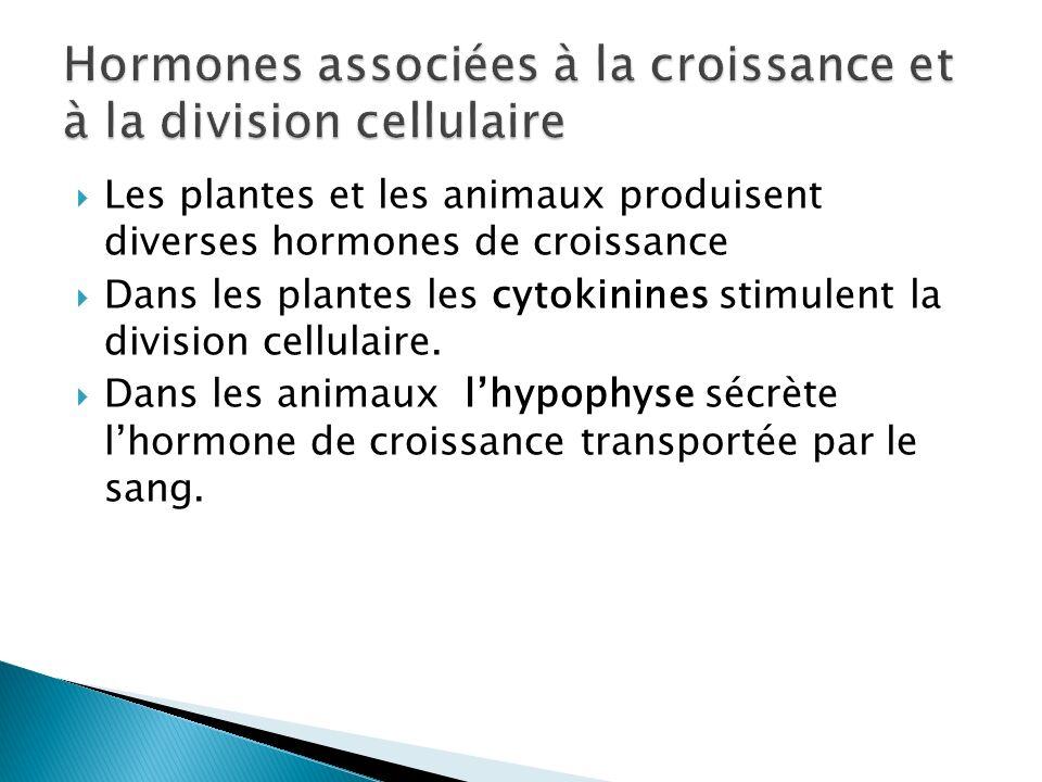 Les plantes et les animaux produisent diverses hormones de croissance Dans les plantes les cytokinines stimulent la division cellulaire. Dans les anim