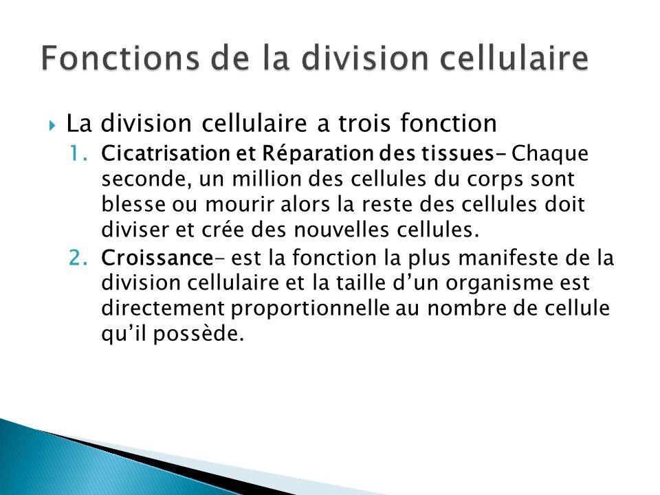 La division cellulaire a trois fonction 1.Cicatrisation et Réparation des tissues- Chaque seconde, un million des cellules du corps sont blesse ou mou