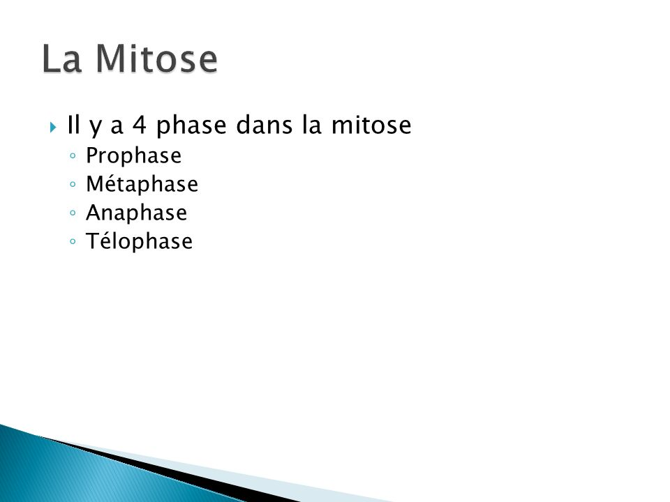 Il y a 4 phase dans la mitose Prophase Métaphase Anaphase Télophase