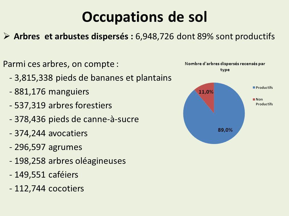 Occupations de sol Arbres et arbustes dispersés : 6,948,726 dont 89% sont productifs Parmi ces arbres, on compte : - 3,815,338 pieds de bananes et pla