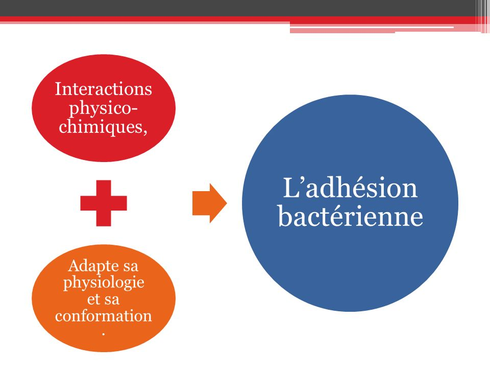 Interactions physico- chimiques, Adapte sa physiologie et sa conformation. Ladhésion bactérienne