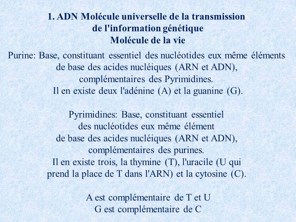 Purine: Base, constituant essentiel des nucléotides eux même éléments de base des acides nucléiques (ARN et ADN), complémentaires des Pyrimidines. Il