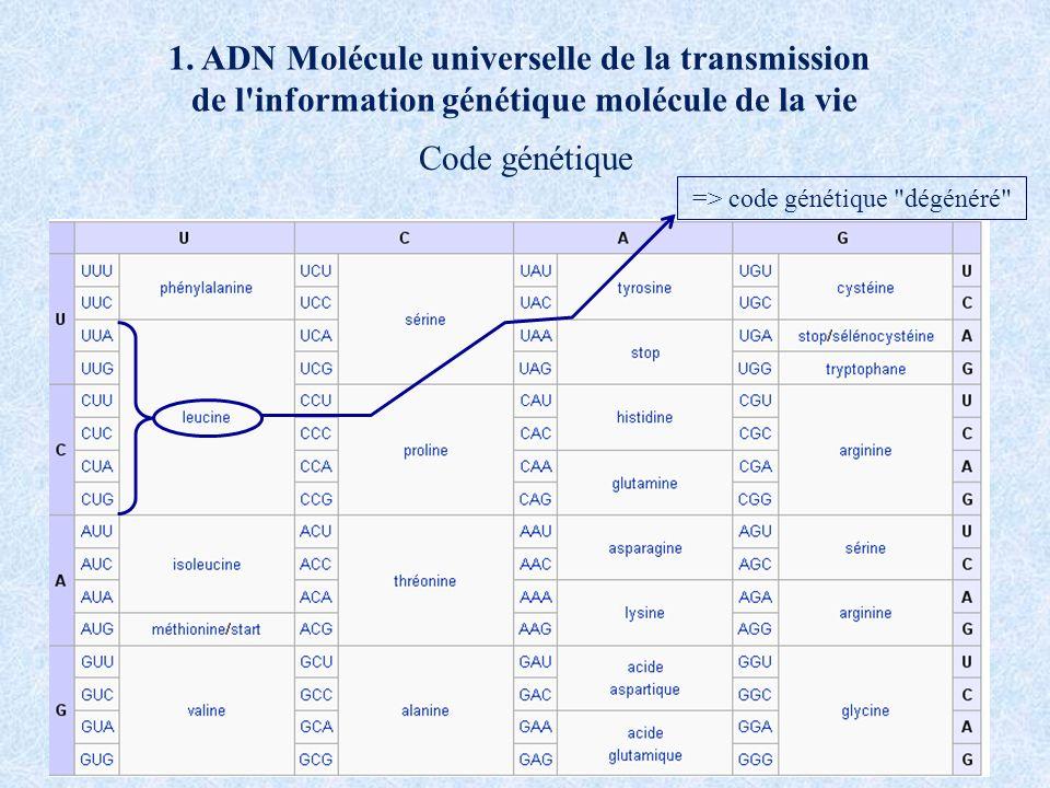 1. ADN Molécule universelle de la transmission de l'information génétique molécule de la vie Code génétique => code génétique