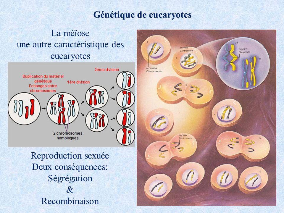 Génétique de eucaryotes La méïose une autre caractéristique des eucaryotes Reproduction sexuée Deux conséquences: Ségrégation & Recombinaison