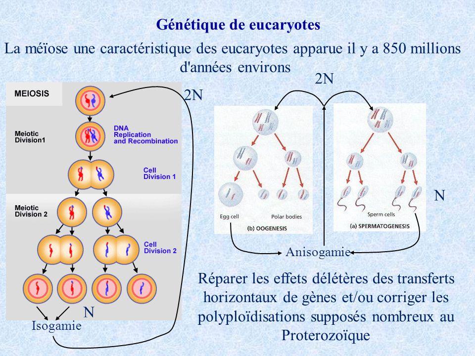 Génétique de eucaryotes La méïose une caractéristique des eucaryotes apparue il y a 850 millions d'années environs Réparer les effets délétères des tr