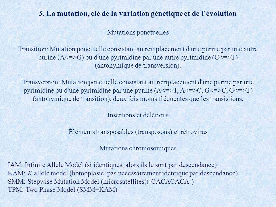 Mutations ponctuelles Transition: Mutation ponctuelle consistant au remplacement d'une purine par une autre purine (A G) ou d'une pyrimidine par une a