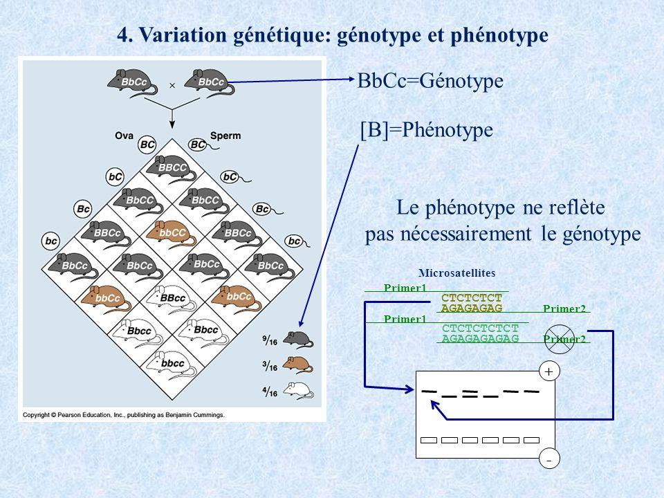 4. Variation génétique: génotype et phénotype BbCc=Génotype [B]=Phénotype Le phénotype ne reflète pas nécessairement le génotype CTCTCTCT AGAGAGAG Pri