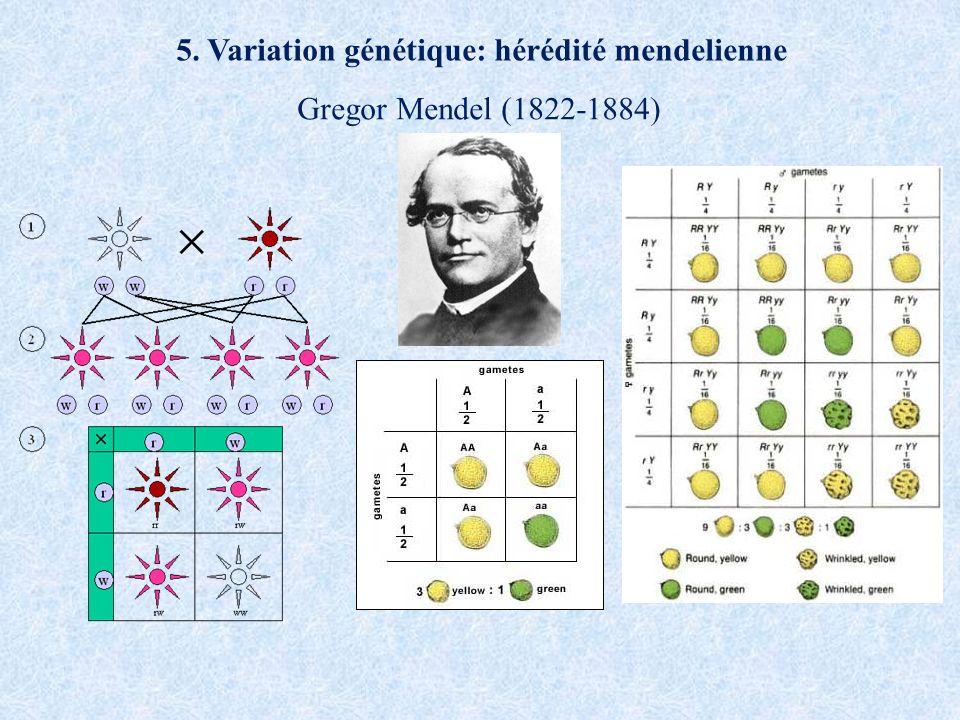 5. Variation génétique: hérédité mendelienne Gregor Mendel (1822-1884)