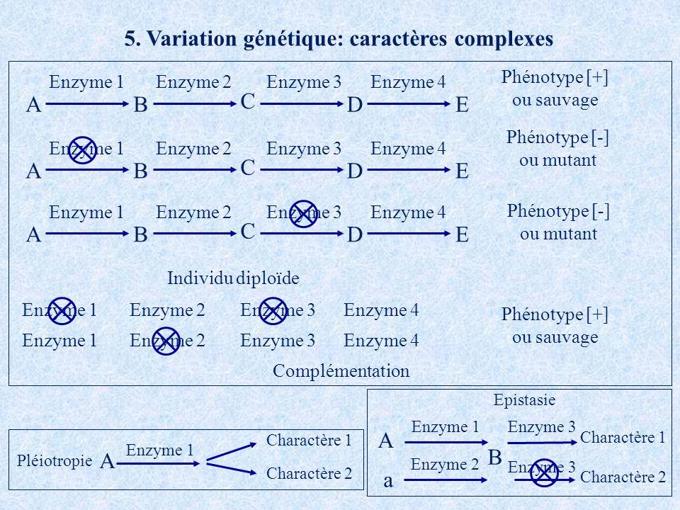 5. Variation génétique: caractères complexes AB C DE Enzyme 4Enzyme 2Enzyme 3Enzyme 1 AB C DE Enzyme 4Enzyme 2Enzyme 3Enzyme 1 AB C DE Enzyme 4Enzyme