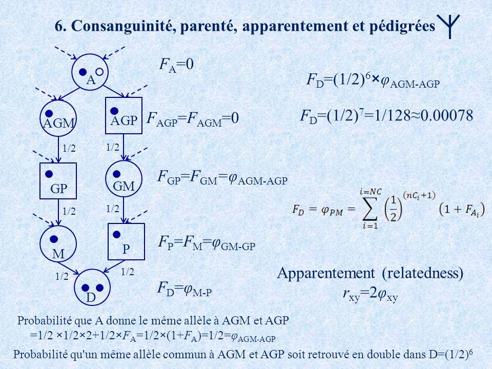 6. Consanguinité, parenté, apparentement et pédigrées A 1/2 D M P GP GM AGM AGP F GP =F GM =φ AGM-AGP F AGP =F AGM =0 F P =F M =φ GM-GP F D =φ M-P F A