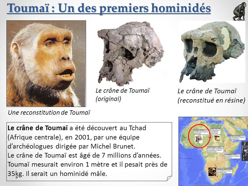 Toumaï : Un des premiers hominidés Le crâne de Toumaï (original) Le crâne de Toumaï (reconstitué en résine) Une reconstitution de Toumaï Le crâne de T