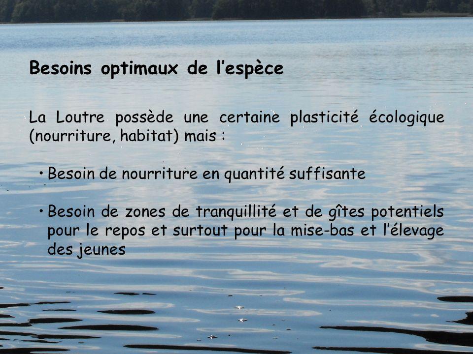 Besoins optimaux de lespèce La Loutre possède une certaine plasticité écologique (nourriture, habitat) mais : Besoin de nourriture en quantité suffisa