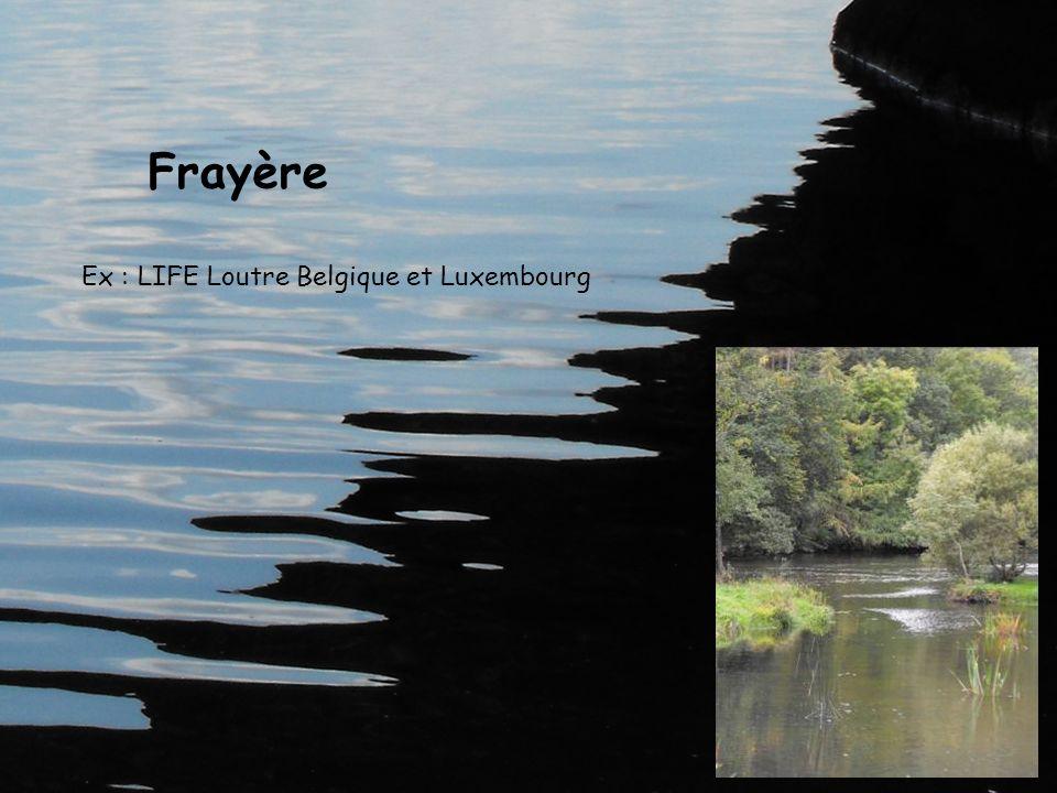 Frayère Ex : LIFE Loutre Belgique et Luxembourg