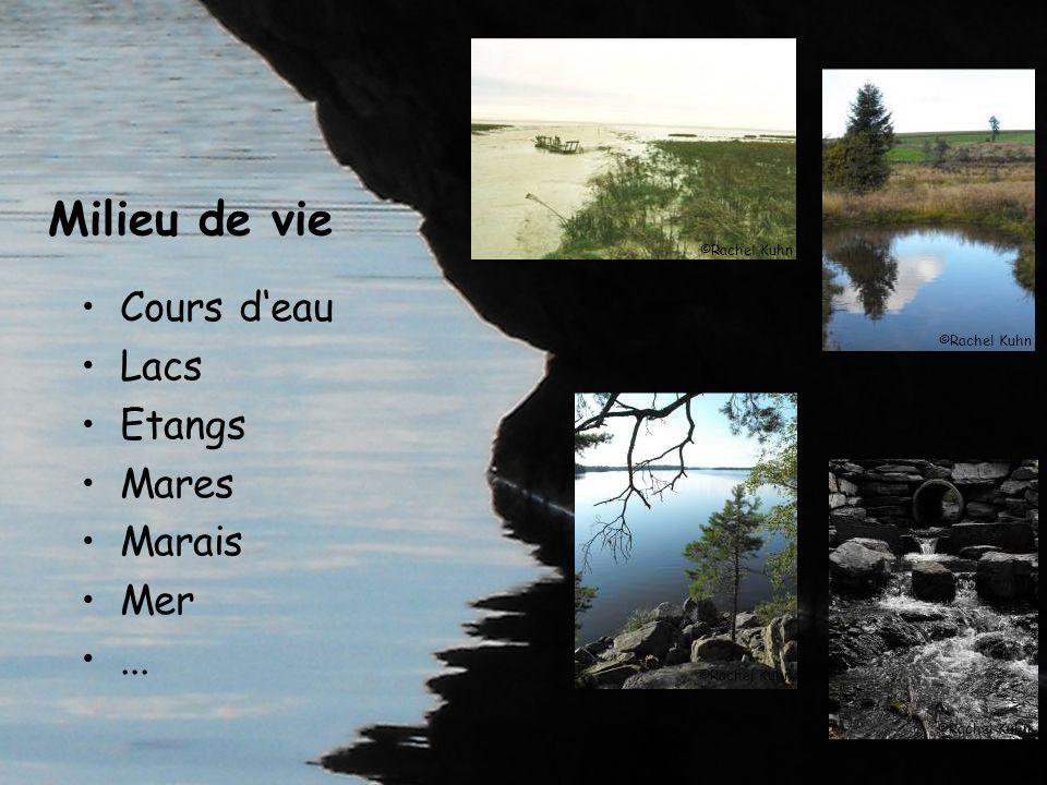 Cours deau Lacs Etangs Mares Marais Mer... Milieu de vie ©Rachel Kuhn