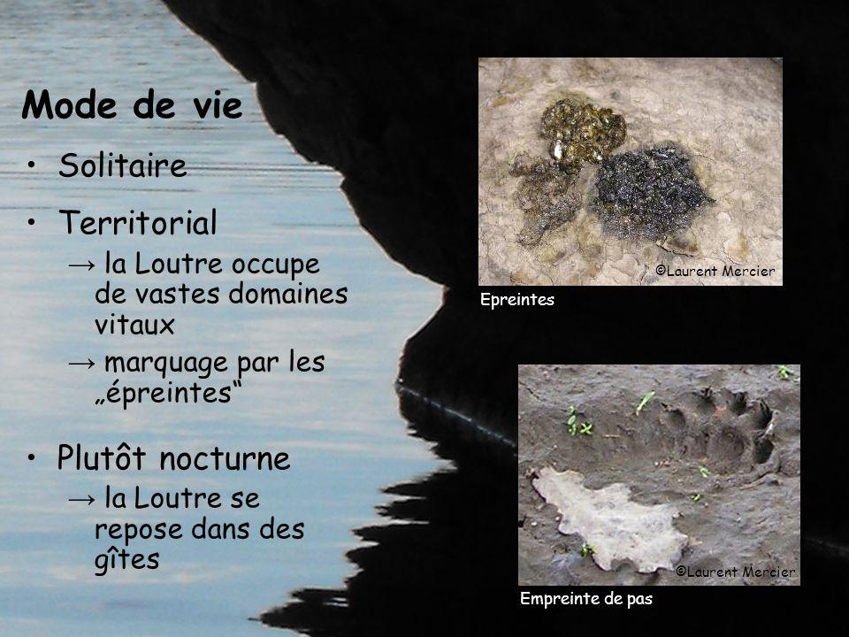 Mode de vie Solitaire Territorial la Loutre occupe de vastes domaines vitaux marquage par les épreintes Plutôt nocturne la Loutre se repose dans des g