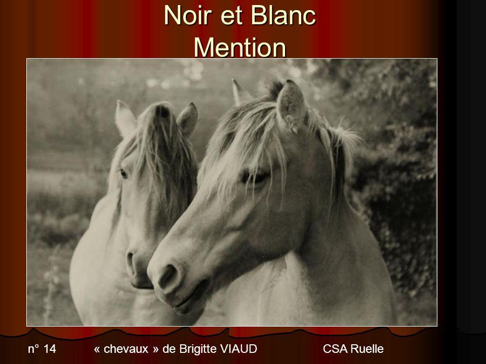 Catégorie gravure 2 ème prix N° 97 « Les grondins malicieux» de Jacques NANDELEC – ASAL Lorient