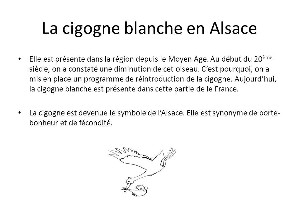 La cigogne blanche en Alsace Elle est présente dans la région depuis le Moyen Age. Au début du 20 ème siècle, on a constaté une diminution de cet oise
