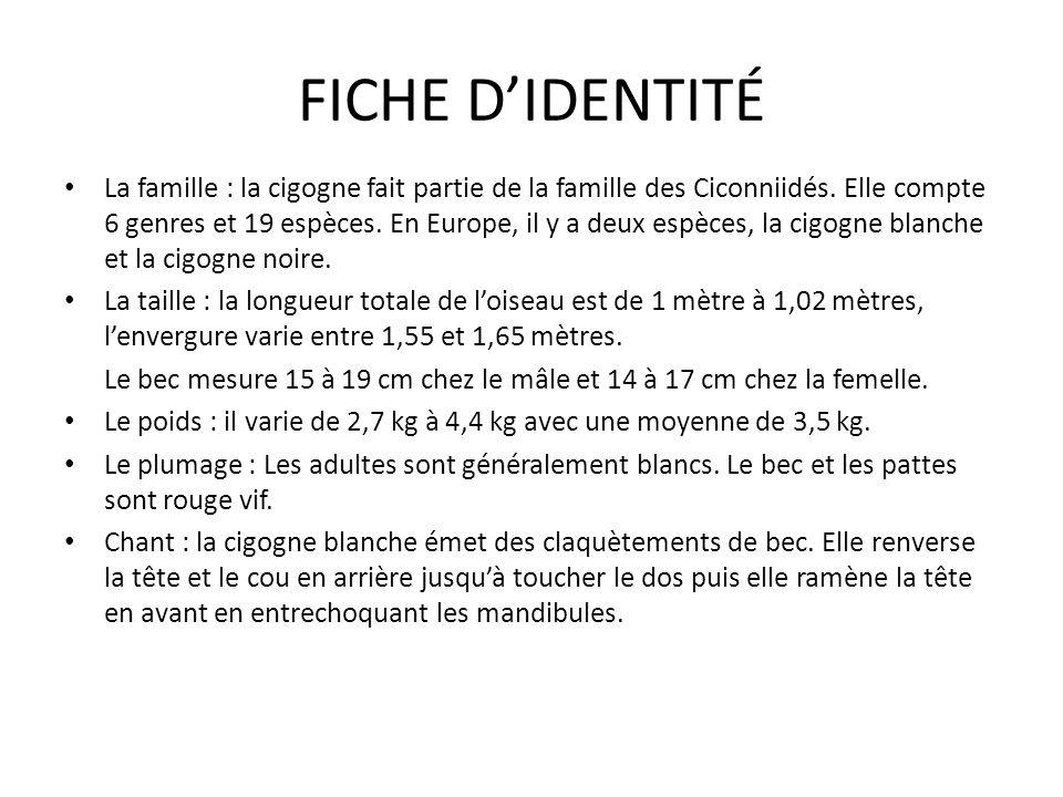 FICHE DIDENTITÉ La famille : la cigogne fait partie de la famille des Ciconniidés. Elle compte 6 genres et 19 espèces. En Europe, il y a deux espèces,