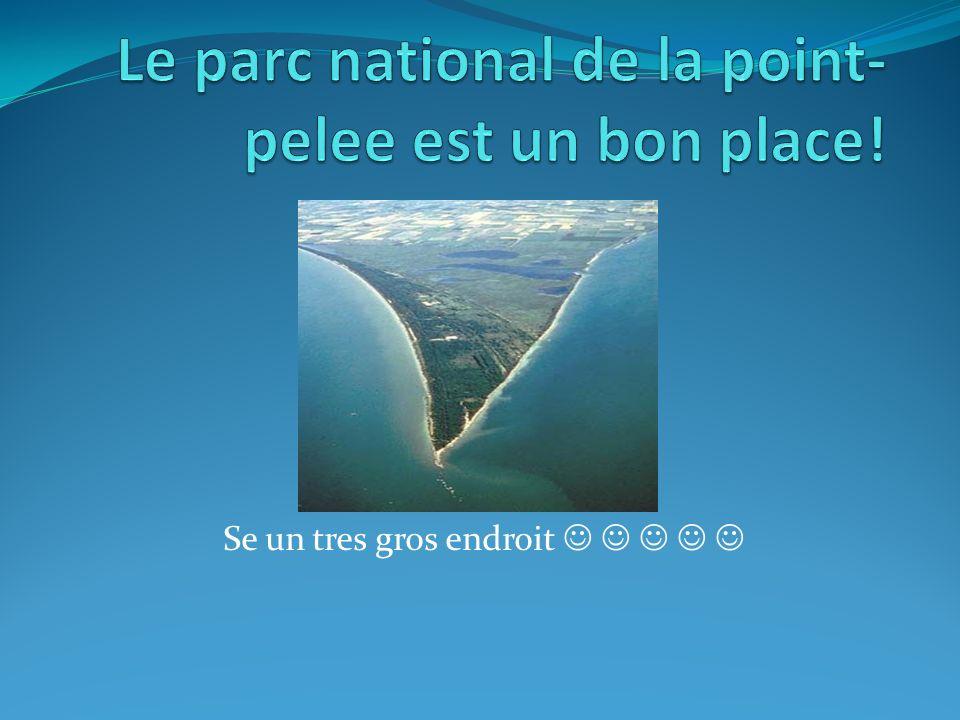 Un endroit unique Chaque anee environ le parc national de la point pelee est 400 000 visiteurs.