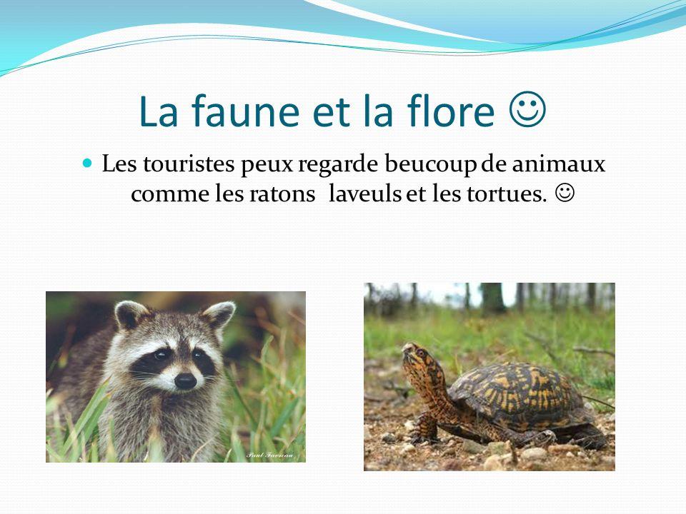 La faune et la flore Les touristes peux regarde beucoup de animaux comme les ratons laveuls et les tortues.
