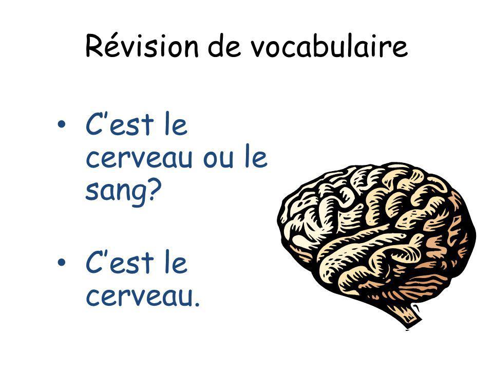 Révision de vocabulaire Cest le cerveau ou le sang? Cest le cerveau.