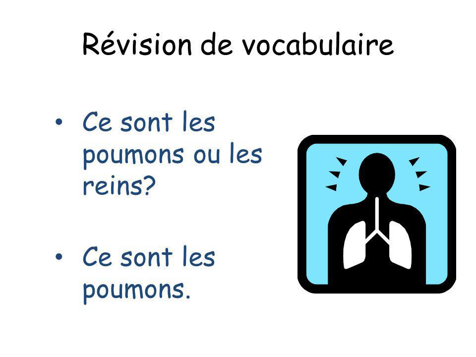 Révision de vocabulaire Ce sont les poumons ou les reins? Ce sont les poumons.