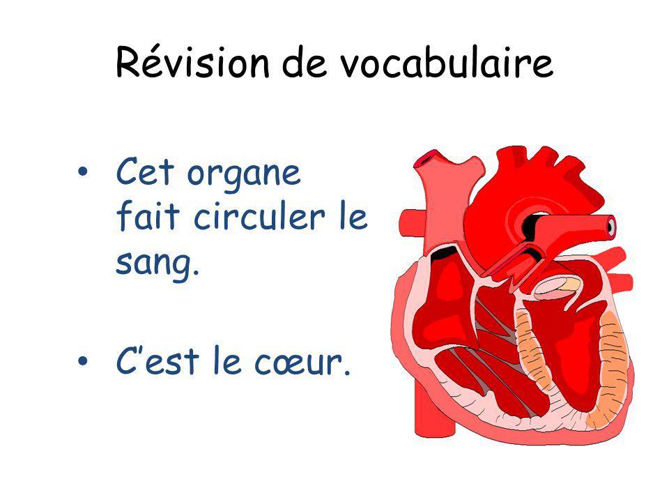 Révision de vocabulaire Cet organe fait circuler le sang. Cest le cœur.