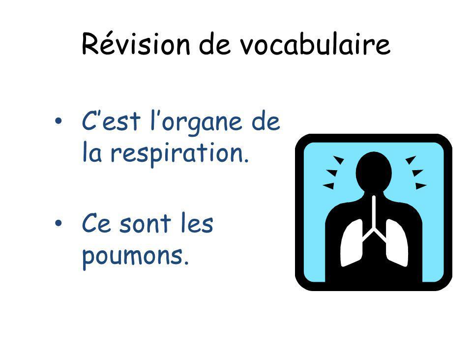 Révision de vocabulaire Cest lorgane de la respiration. Ce sont les poumons.