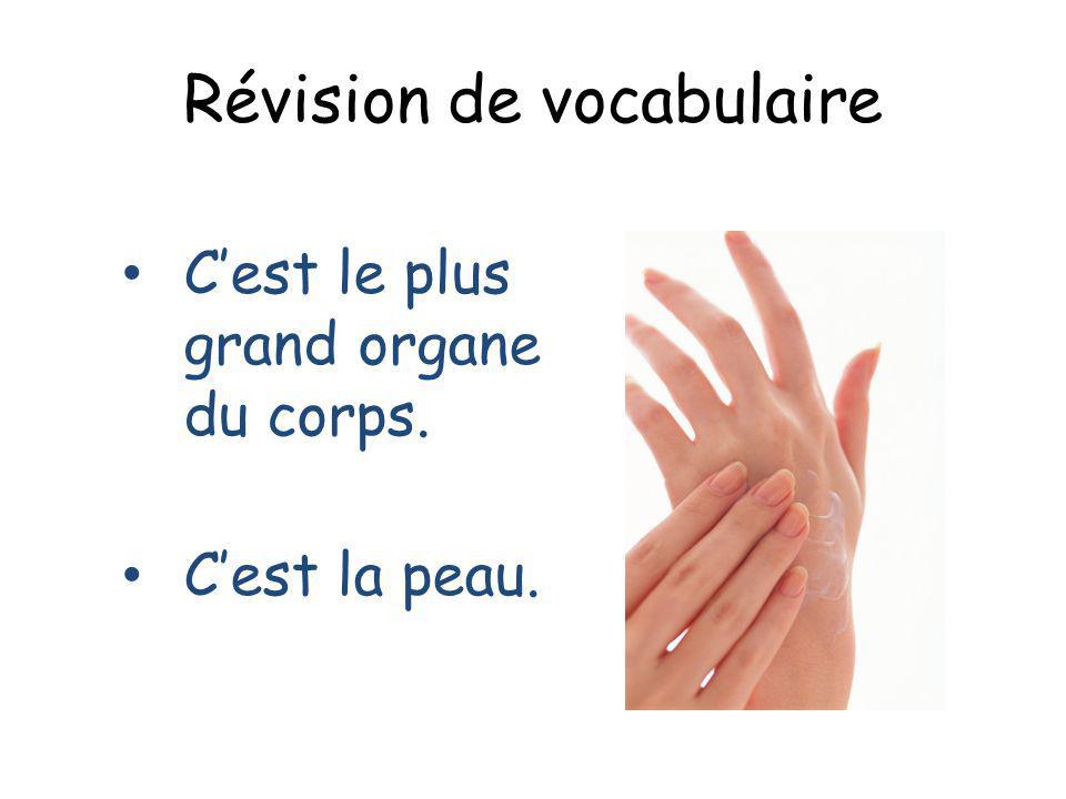 Révision de vocabulaire Cest le plus grand organe du corps. Cest la peau.