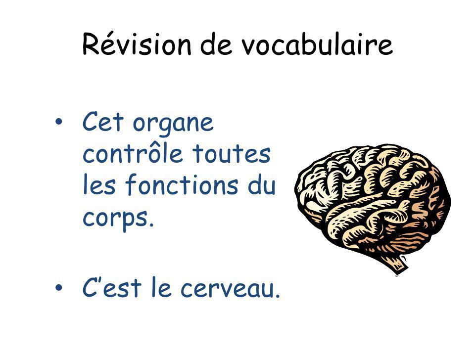Révision de vocabulaire Cet organe contrôle toutes les fonctions du corps. Cest le cerveau.