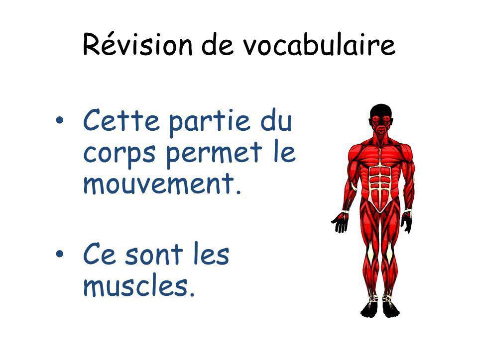 Révision de vocabulaire Cette partie du corps permet le mouvement. Ce sont les muscles.