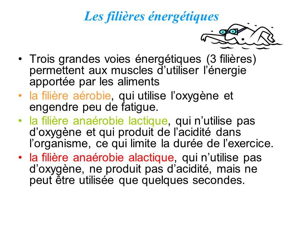 Trois grandes voies énergétiques (3 filières) permettent aux muscles dutiliser lénergie apportée par les aliments la filière aérobie, qui utilise loxy