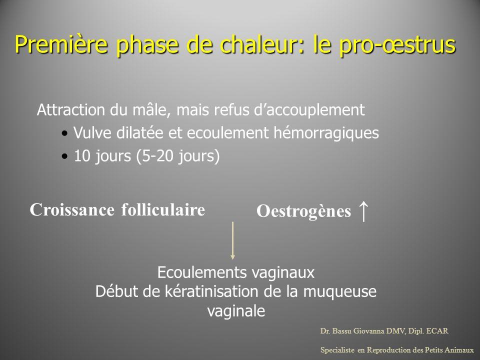 Dr. Bassu Giovanna DMV, Dipl. ECAR Specialiste en Reproduction des Petits Animaux Première phase de chaleur: le pro-œstrus Attraction du mâle, mais re