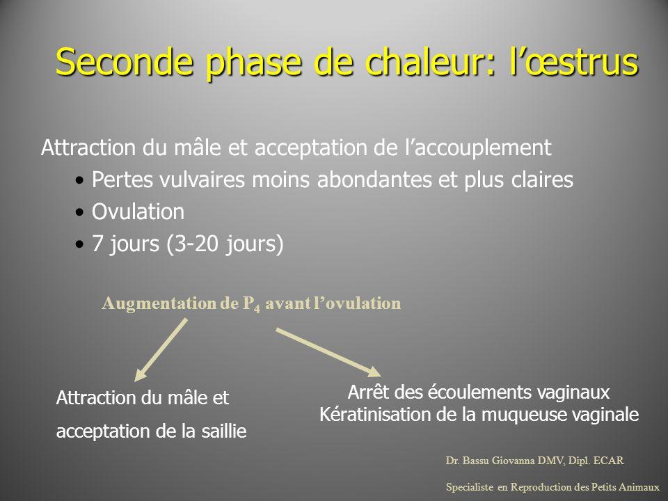 Dr. Bassu Giovanna DMV, Dipl. ECAR Specialiste en Reproduction des Petits Animaux Seconde phase de chaleur: lœstrus Attraction du mâle et acceptation