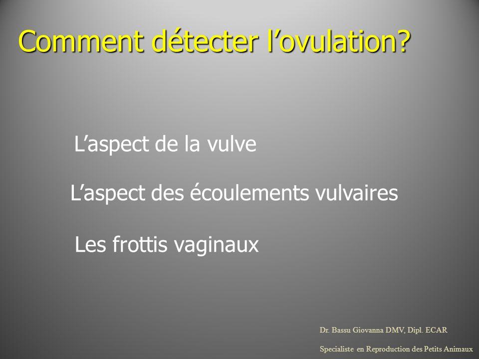 Dr. Bassu Giovanna DMV, Dipl. ECAR Specialiste en Reproduction des Petits Animaux Laspect de la vulve Comment détecter lovulation? Laspect des écoulem