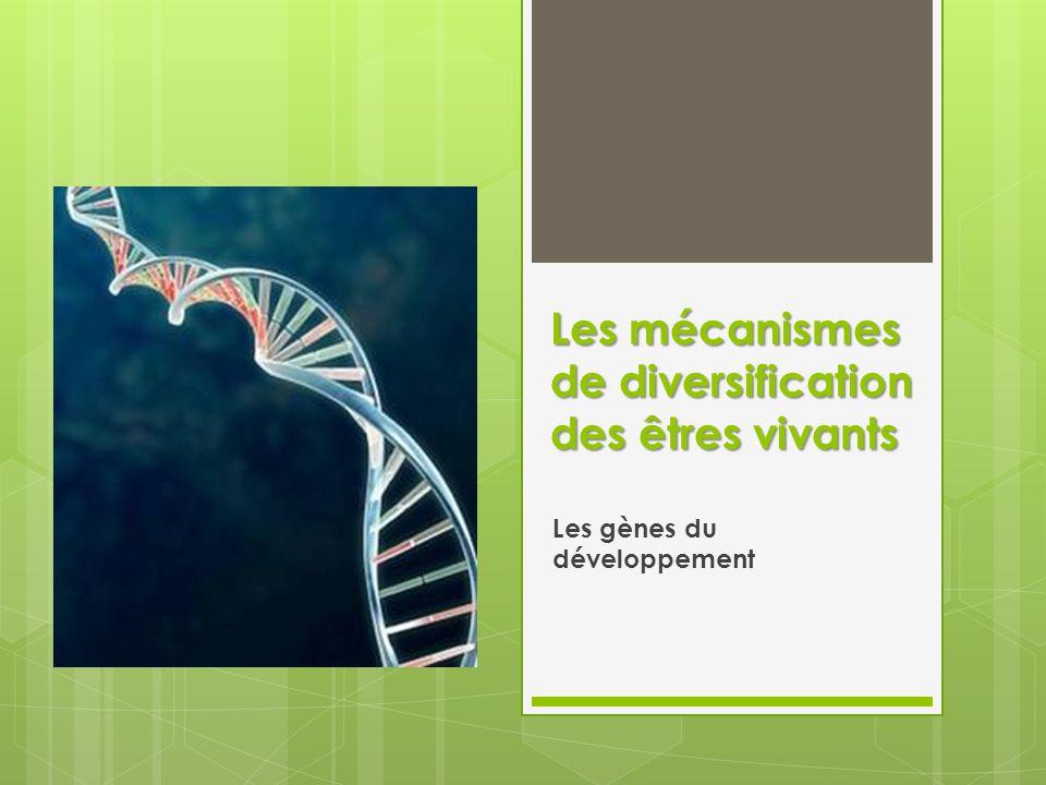 Les mécanismes de diversification des êtres vivants Les gènes du développement