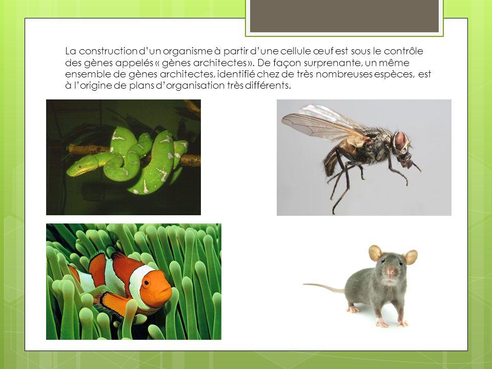 En utilisant les informations issues des documents suivant, vous montrerez que la diversité des êtres vivants peut être une conséquence de mécanismes dorigine génétique.