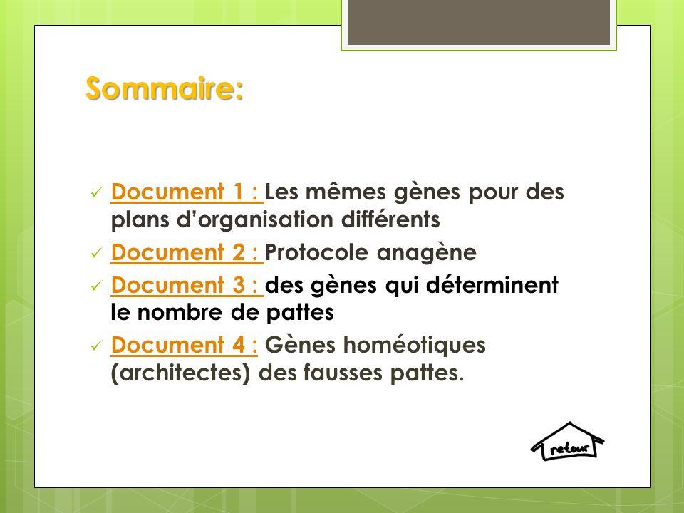 Sommaire: Document 1 : Les mêmes gènes pour des plans dorganisation différents Document 1 : Document 2 : Protocole anagène Document 2 : Document 3 : d